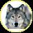 Grey_Wolf